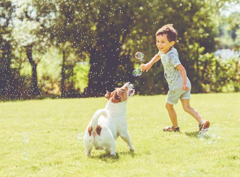 Summer fun at backyard lawn at hot day